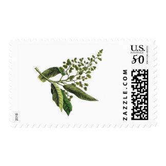 Vintage Botanical Greenery Postage Stamp