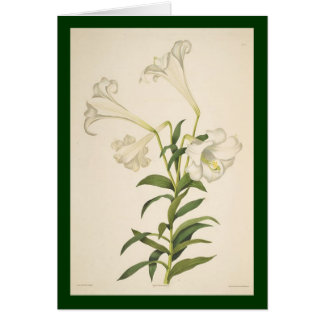Vintage Botanical Lily Flowers Card