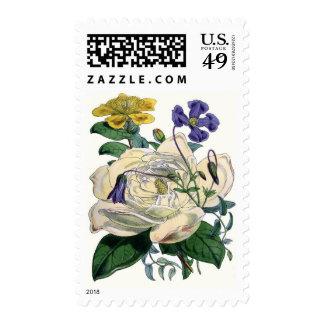 Vintage Botanical Magnolia Print Postage Stamp