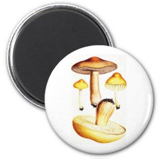 Vintage Botanical Mushrooms 2 Inch Round Magnet
