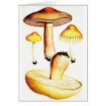 Vintage Botanical Mushrooms Greeting Card