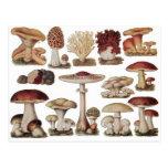 Vintage Botanical Mushrooms Postcards