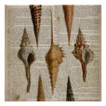 vintage botanical ocean beach sea shells poster