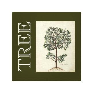 Vintage Botanical Olive Tree Art Canvas