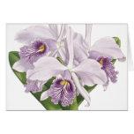 Vintage Botanical Orchids Card