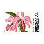 Vintage Botanical Orchids Stamps