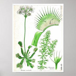 Vintage Botanical Poster - Carnivorous Plant