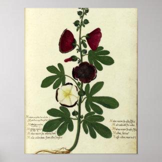 Vintage Botanical Poster - Hollyhock
