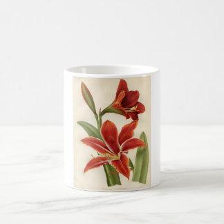 Vintage Botanical Print - Amaryllis Coffee Mug