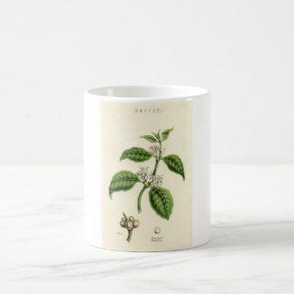 Vintage Botanical Print - Coffee Coffee Mug