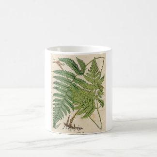 Vintage Botanical Print - Ferns Coffee Mug