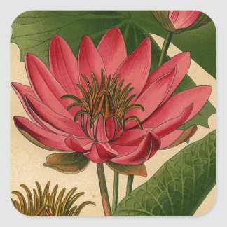 Vintage Botanical Print Pink Water Lily Lotus Sticker