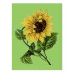Vintage Botanicals Dandy Sunflower Post Card
