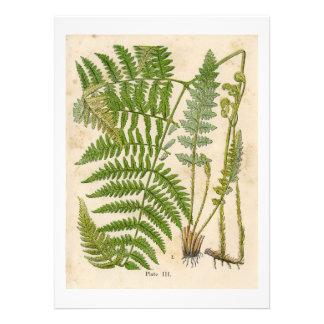 Vintage Botanicals Illustrations Personalized Announcement