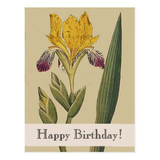 Vintage Botanicals Iris Happy Birthday Postcard