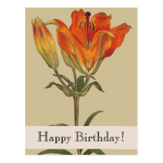 Vintage Botanicals Lily Happy Birthday Postcard