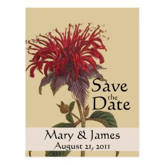 Vintage Botanicals Monarda Save the Date Postcard