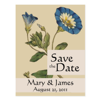 Vintage Botanicals Morning Glory Save the Date Post Card