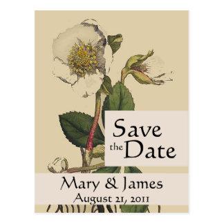 Vintage Botanicals Rose Save the Date Postcard