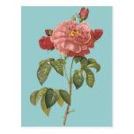 *Vintage botánico francés Flowers* de la belleza Tarjetas Postales