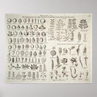 Vintage Botany Leaves & Flowers Reference, 1753 Poster