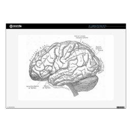 "Vintage Brain Anatomy 15"" Laptop Skins"
