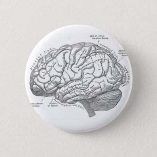 Vintage Brain Anatomy Button