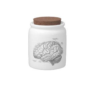 Vintage Brain Anatomy Candy Jar