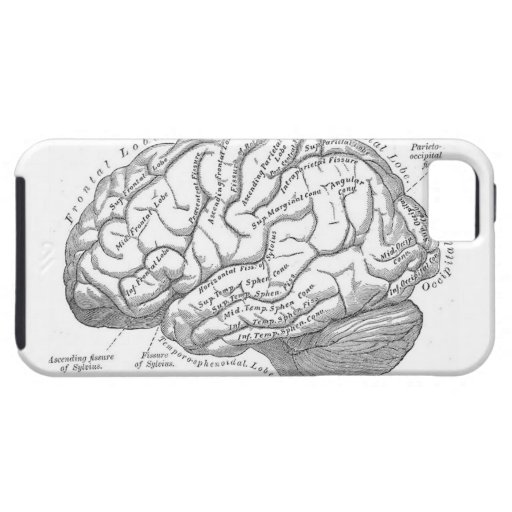 Vintage Brain Anatomy Cover For iPhone 5/5S