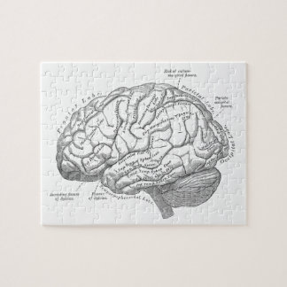 Vintage Brain Anatomy Puzzles