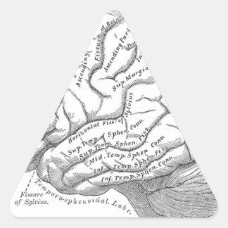 Vintage Brain Anatomy Triangle Sticker