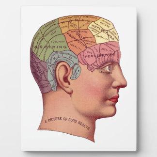Vintage Brain Function Illustration Plaque