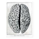 Vintage Brain Postcard