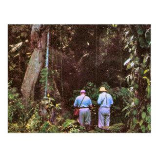 Vintage Brazil, Primary rain forest Postcard