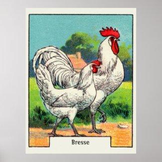 Vintage Bresse Chicken Poster