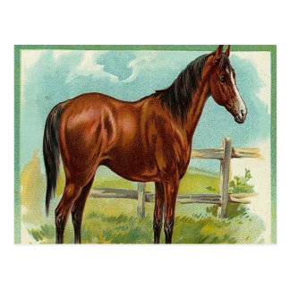 Vintage, Brown Horse Postcard