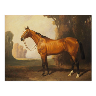 Vintage Brown Thoroughbred Horse Postcard