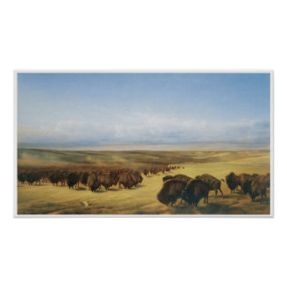 Vintage Buffalo Herd Poster