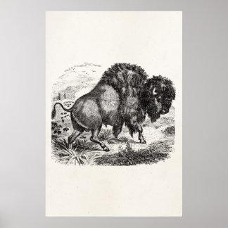 Vintage Buffalo Retro Bison Animal Illustration Poster
