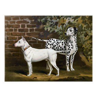 Vintage Bull Terrier and Dalmatian dog art Poster