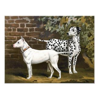 Vintage bull terrier y arte dálmata del perro impresion fotografica