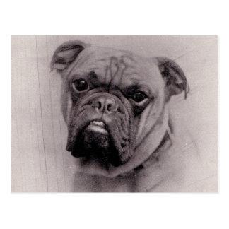 Vintage Bulldog Face Photograph Postcard