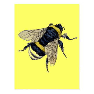 Vintage Bumble Bee Postcard