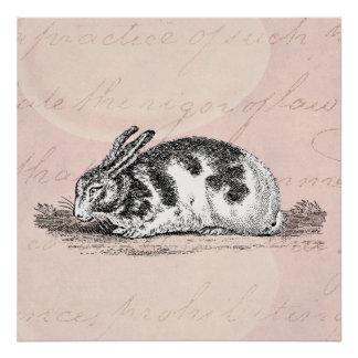 Vintage Bunny Rabbit Illustration -1800's Rabbits Poster