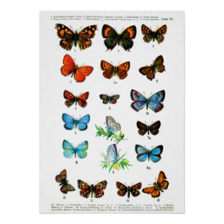 Vintage butterfies book butterfly insect print