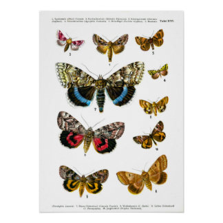 Vintage butterfies book butterfly plate print
