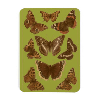 Vintage Butterflies and Moths Magnet