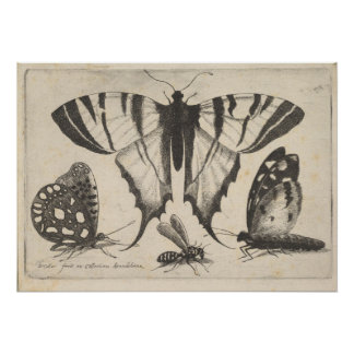 Vintage Butterflies Wasp Insect Art Print (01)
