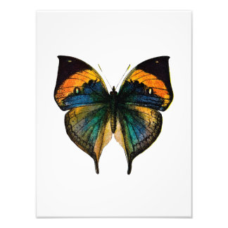 Vintage Butterfly - 1800's Antique Butterfly Litho Photograph