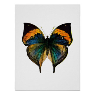 Vintage Butterfly - 1800's Antique Butterfly Litho Poster